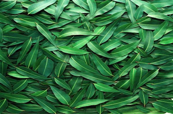 yu-kariradexiata_aroma