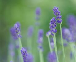 rabenda-_kouka_kounou_aroma