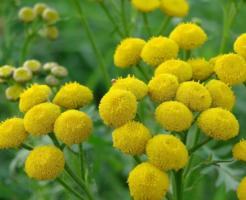 komontanji-_aroma